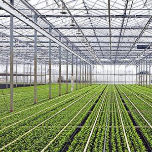 اقلیم هوشمند گلخانه های کشت خاکی، گلدانی، هیدروپونیک